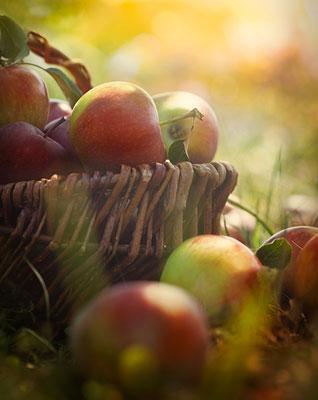 apple-bliss