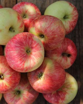 apple-fast
