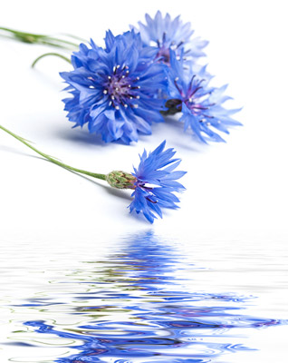 blue-flower-water
