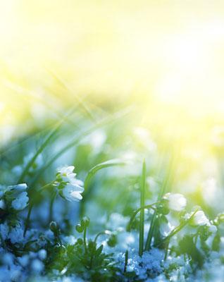 flower-sunlight