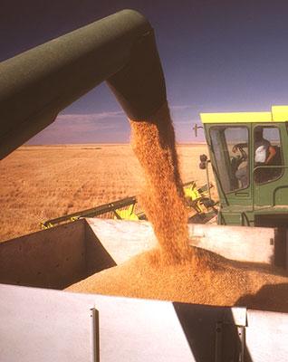 grain-manufacturing