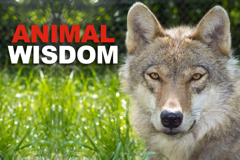 Sacred Truth Ep. 39: Animal Wisdom