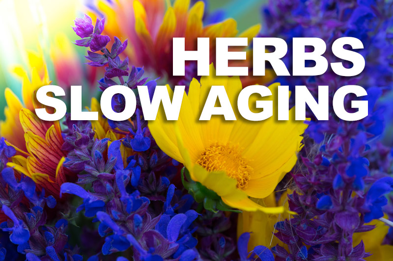 Sacred Truth Ep. 44: Herbs Slow Aging