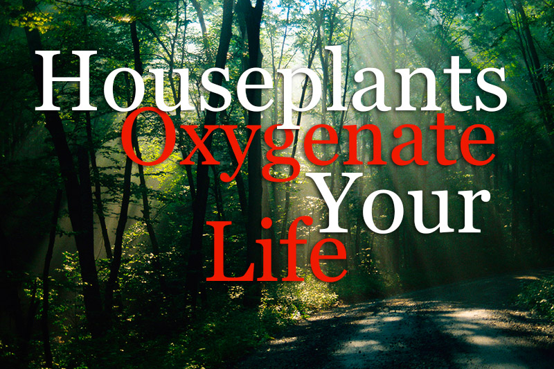 Houseplants - Oxygenate Your Life Pure Magic From Plants