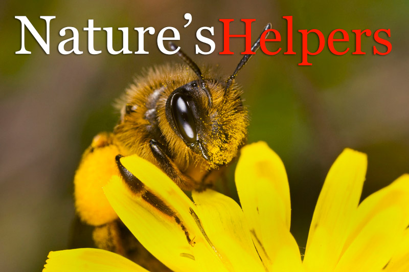 Nature's Helpers