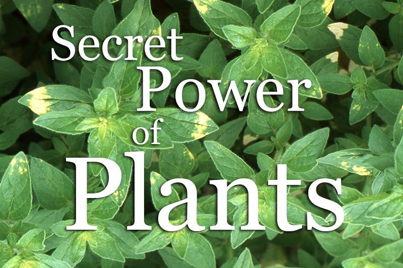 Secret Powers Of Plants