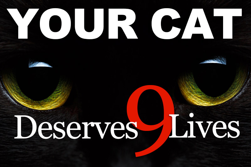 Your Cat Deserves 9 Lives