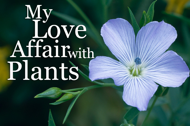 My Love Affair With Plants